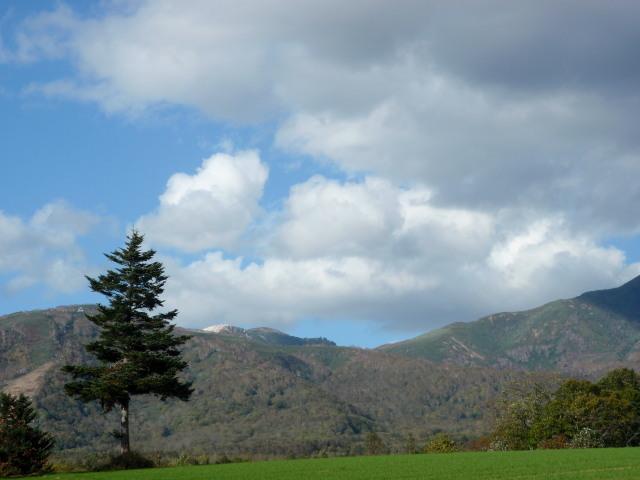 トドマツとニセコ山系.jpg